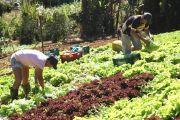 Agricultura-Familiar-divulgação-seag-2.jpeg