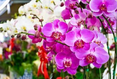 Com mais de mil espécies Feira das Orquídeas garante ração para animais da OPPA